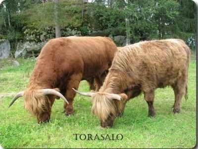 Torasalo